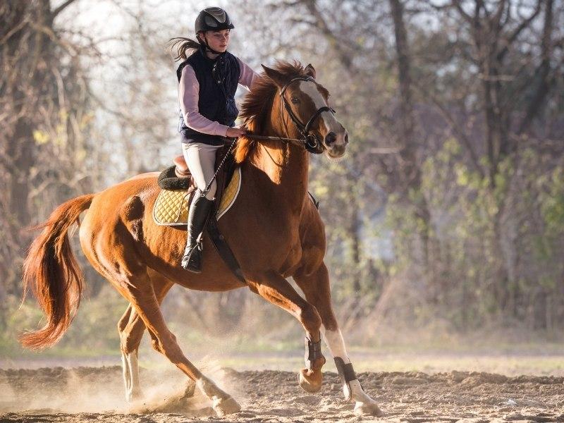 club di equitazione monferrato